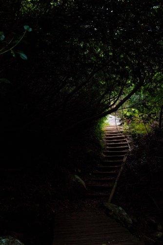 To Skeleton Gorge